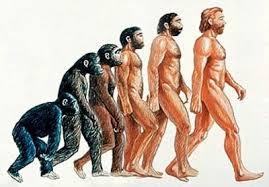 体毛の進化